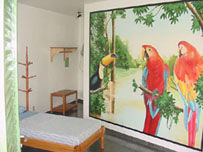 Mango Guesthouse, Manaus, Brazil, late hotel check in available in Manaus